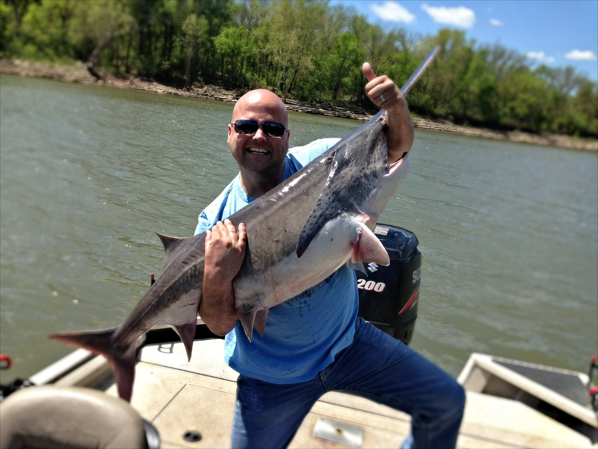 image gallery spoonbill paddlefish