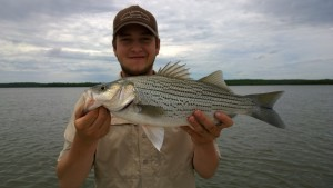 Hybrid-Striper Wiper Birch Lake Oklahoma