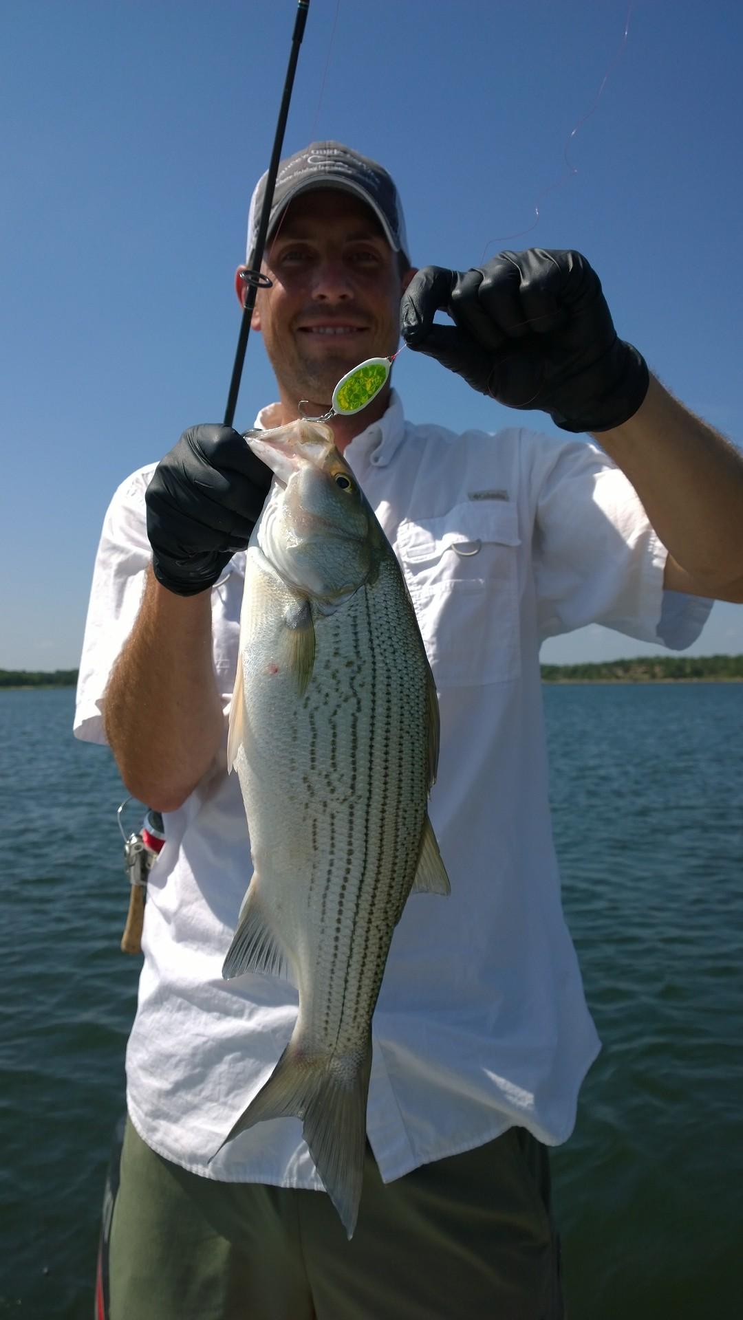 Skiatook lake scouting time hybrid striper 6 11 15 for Skiatook lake fishing report