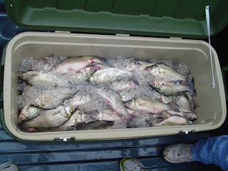 Eagle mountain white bass for White mountain fishing report