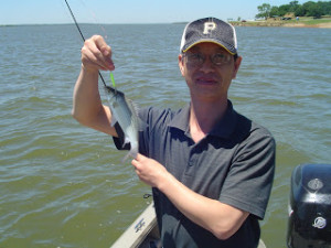 Grapevine Lake White Bass