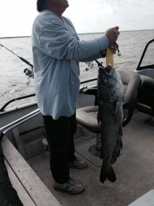 Oologah blue catfish