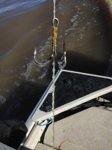 Spoonbill Paddlefish Hook Frozen