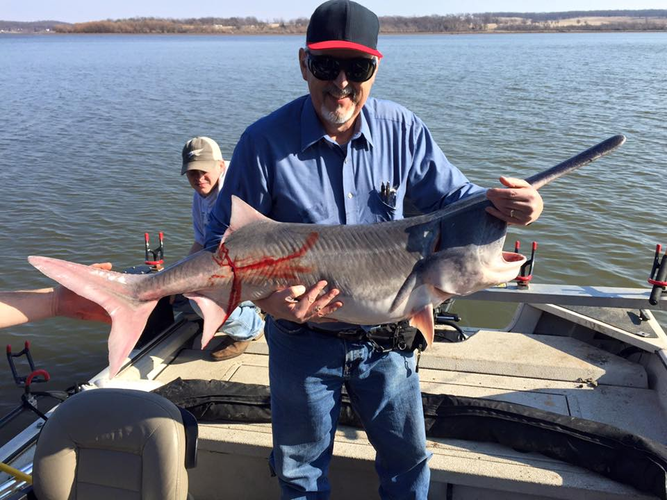 Spoonbill paddlefish and white bass grand lake 2 20 16 for Spoonbill fish oklahoma