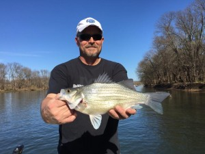 White Bass Grand Lake