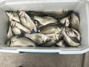 White Bass Fishing Grand Lake Oklahoma